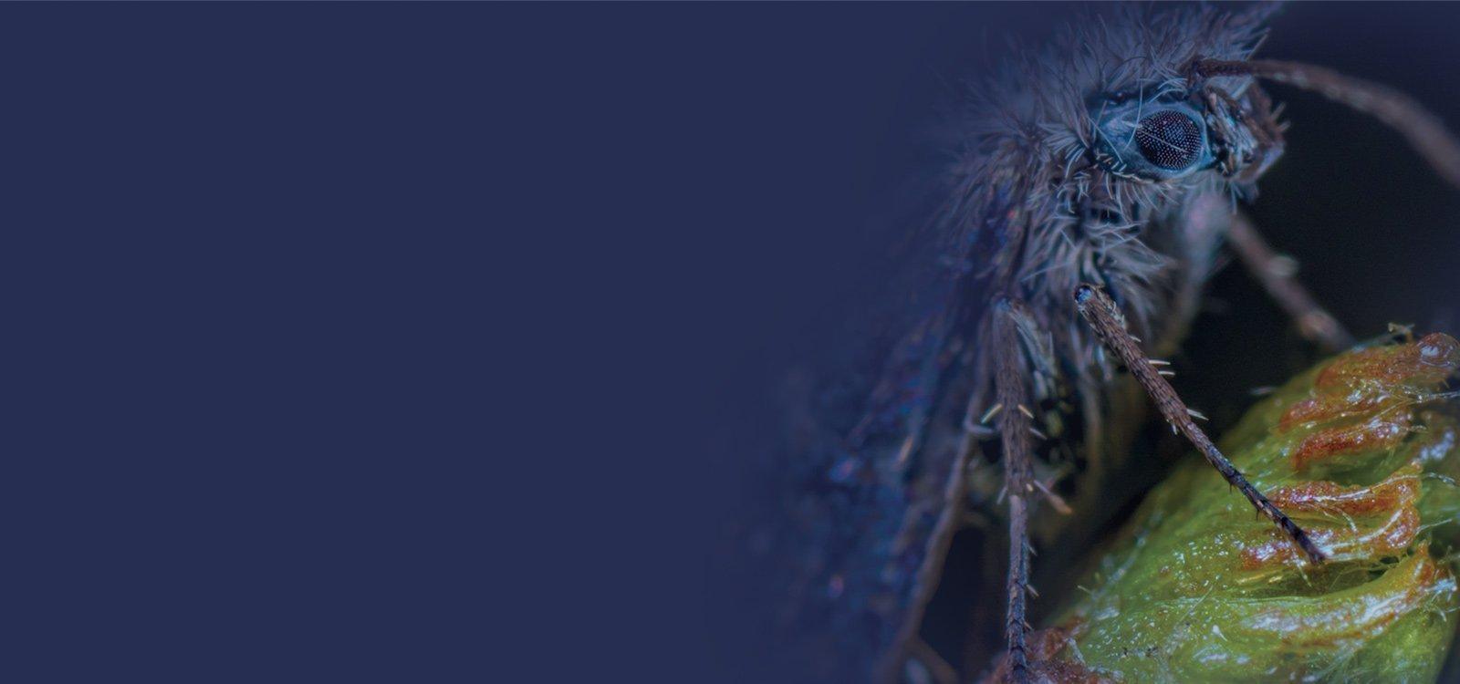 pestnet insetticidi